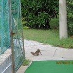 scoiattolo a passeggio