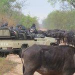 Open top safari vehicles