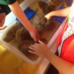 Touch tank with sea cucumbers