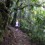 A trilha (sendero) até o Rio