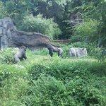 Awesome gorilla habitat.