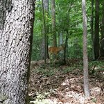 Yes I saw a deer. Woooohoooo!!!
