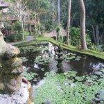 Beautiful cascading gardens