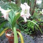 Buffalo and Erie County Botanical Gardens