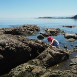 Playing along the rocks at the far side of Weir's beach