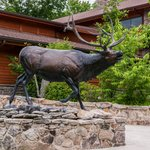 Bronze Elk Sculpture In Front of Visitor Center
