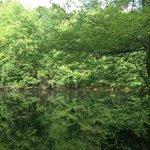 Still Reflecting Pond at Historical Park
