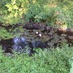 пруд на территории