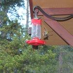 Enjoyed the hummingbirds