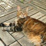 Victoria, the hotel cat