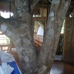 Inside Our Personal Tree House