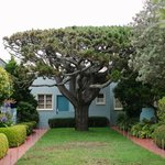 Amazing tree in the courtyard