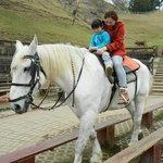 Horse-Riding at Green Grassland