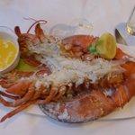 3 Pound Lobster