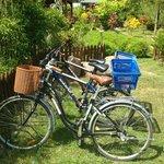 Rented bikes
