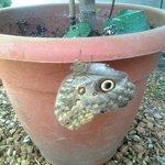 papillon yeux de chouette