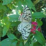 papillon fleurs