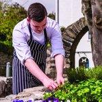 Chef in herb garden