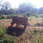 Uganda Wildlife Education Centre