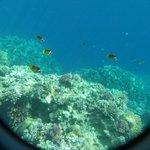 snorkling - buy underwater case from shop