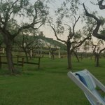 il bel giardino con gli ulivi......