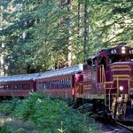 Skunk Train to the Redwoods