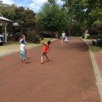 cricket at the resort