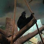Primates exhibit