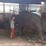 Ganga the baby elephant