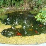 Pesci rossi della fattoria