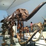 dinosaurios at ROM
