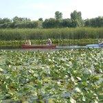 Wonderful canoeing on Point Pelee National Park's waterways