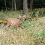 wildlife galore here. They keep the trails very maintained so nice for hiking on their private t