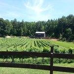 Stonewall Creek Vineyards, Tiger Ga.
