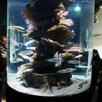 Tanque no meio do aquarium
