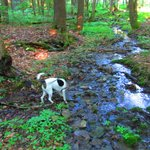 lots of streams along the trails