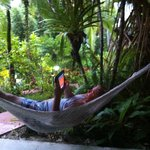 bungalow hammock!