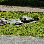 Tartarugas do lago artificial. Vista do restaurante
