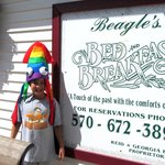 Beagle's with a crazy Knoebel's squid hat