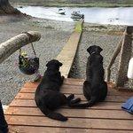 Lodge dogs