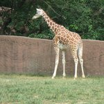 Zoologico de san Luis Missouri