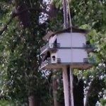 Neighbor's bird house