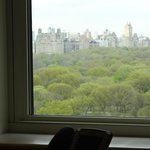 Central Park from our window (16th floor)