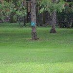 Lo scoiattolo nel parco (al centro foto)