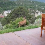 Wildlife outside our room
