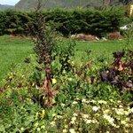 Garden surrounding the center
