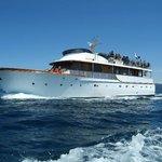 The Safari Rose Yacht