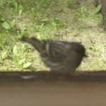 birdfeeder visitor