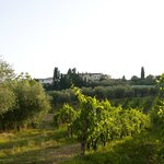 View from the vineyard on the villa