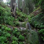 The grove behind Deetjen's